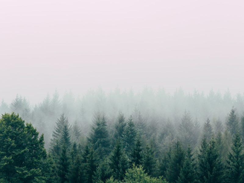 Foresta con nebbia.